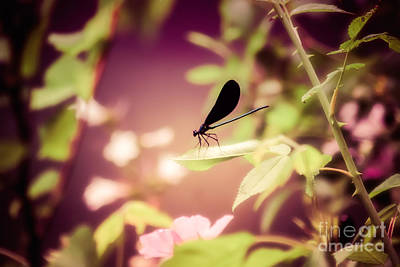Photograph - Resting Damsel by Julie Clements