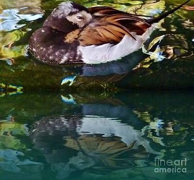 Photograph - Resting Duck  by Susan Garren
