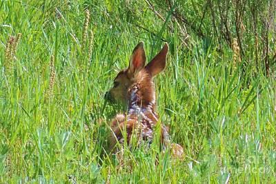 Photograph - Resting Fawn  by Michele Penner