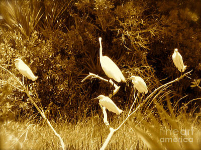 Photograph - Resting Flock Sepia by Anita Lewis