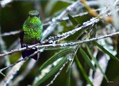 Photograph - Resting Hummingbird by Bibi Rojas