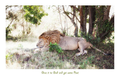Photograph - Resting Lion In The Masai Mara II by June Jacobsen