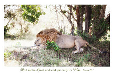 Photograph - Resting Lion On The Masai Mara I by June Jacobsen