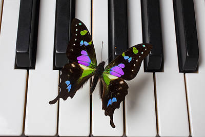 Flutter Photograph - Resting On The Piano by Garry Gay