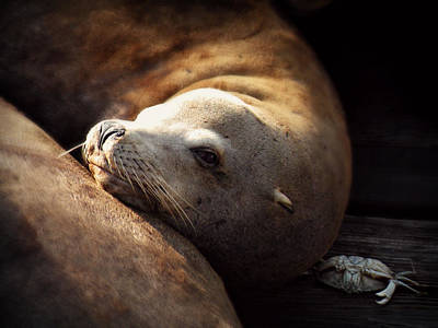 Photograph - Resting On The Pier by Micki Findlay