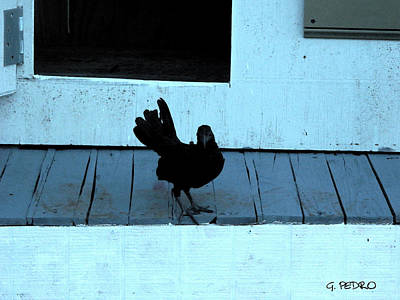 Pekin Bantam Painting - Resting On The Porch  by George Pedro