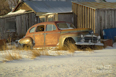 Photograph - Resting Out Back by Idaho Scenic Images Linda Lantzy