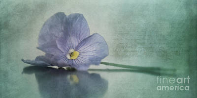 Floral Still Life Photograph - Resting by Priska Wettstein