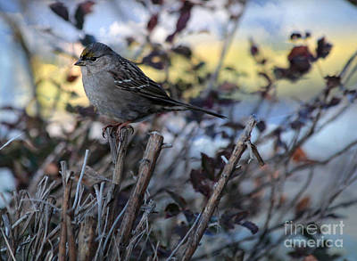 Photograph - Resting Sparrow by Marjorie Imbeau