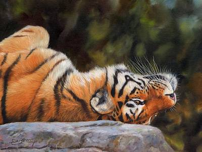 Siberian Wall Art - Painting - Resting Tiger Painting by David Stribbling