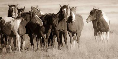Wild Mustang Photograph - Restless by Sandy Sisti