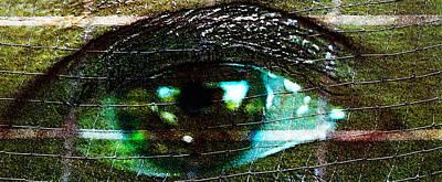 Photograph - Restrained Gaze - Eye - Focus by Marie Jamieson