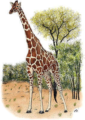 Photograph - Reticulated Giraffe by Roger Hall