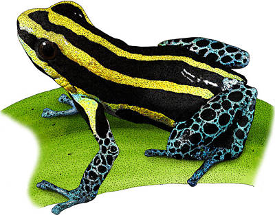 Photograph - Reticulated Poison Frog, Illustration by Roger Hall