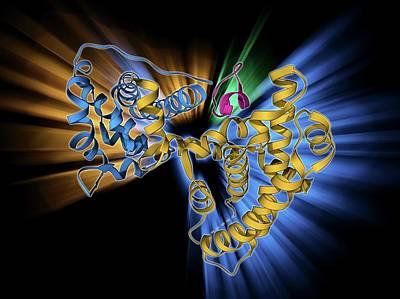 Retinoblastoma Tumor Suppressor Molecule Art Print by Laguna Design
