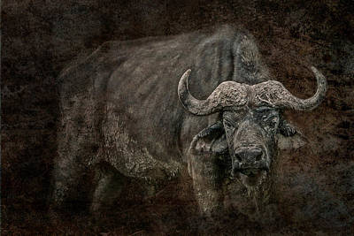 Rhinocerus Photograph - Retired General by Mike Gaudaur
