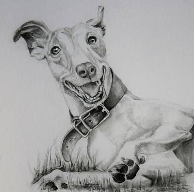 Rescued Greyhound Drawing - Retired Racer by Jean Cormier