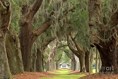 Large Oak Tree Photograph - Retreat Avenue Of The Oaks by Adam Jewell
