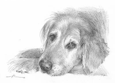 Drawing - Retriever Dog Pencil Portrait by Mike Theuer