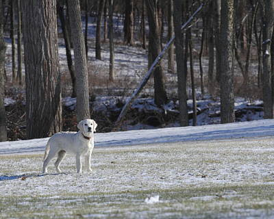 Photograph - Retriever In Winter by Coby Cooper