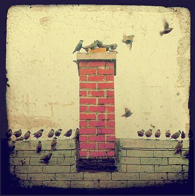 Old School House Digital Art - Retro Birds by Gothicolors Donna