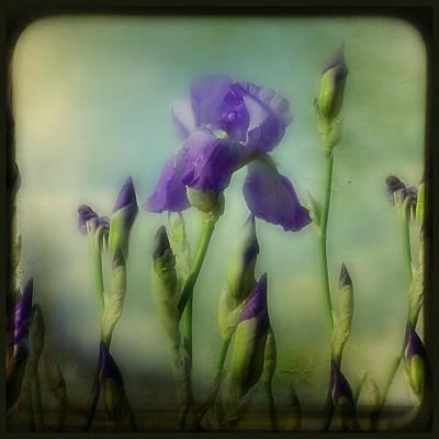 Retro Iris Metting Art Print