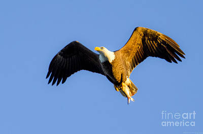 Photograph - Returning From The Kill At Sunset by Jeff at JSJ Photography