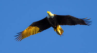 Photograph - Returning From The Kill Near Sunset by Jeff at JSJ Photography