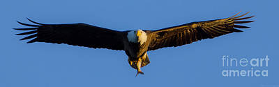 Photograph - Returning From The Kill Panoramic by Jeff at JSJ Photography