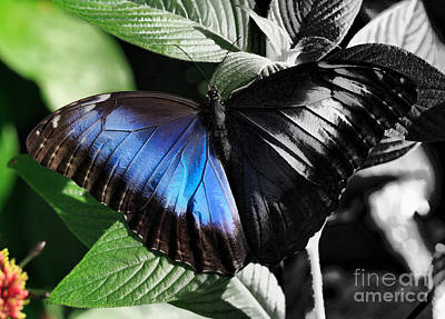 Butterfly Photograph - Reveal by Louise Heusinkveld