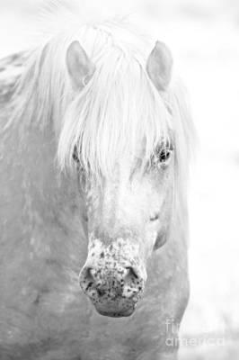 Festblues Photograph - Revelation... by Nina Stavlund