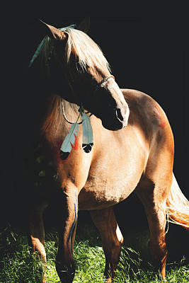 Glass Eyed Pony Photograph - Reverie by Lyndsey Warren