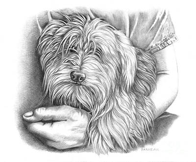 Toy Maltese Drawing - Rexie by Catherine Garneau