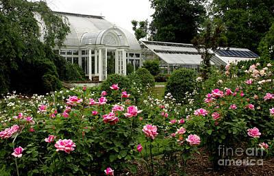 Photograph - Reynolda Gardens  Roses by James C Thomas