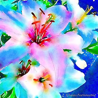 Lilies Photograph - Rhapsody In Blue by Anna Porter