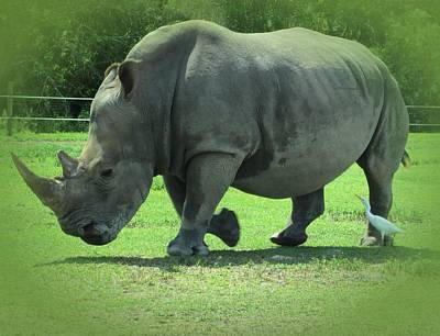 Photograph - Rhino And Friend by MTBobbins Photography