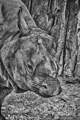 Rhinoceros Photograph - Rhino-black And White V3 by Douglas Barnard