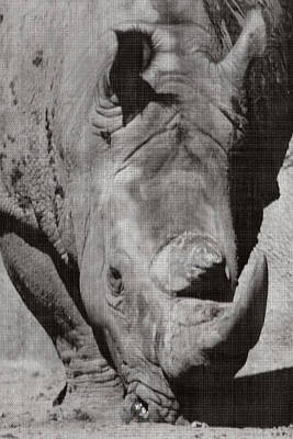 Photograph - Rhino In Gray by Sarah Boyd