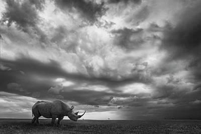 Rhino Wall Art - Photograph - Rhino Land by Mario Moreno