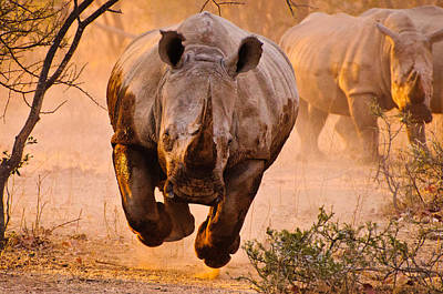 Charge Photograph - Rhino Learning To Fly by Justus Vermaak