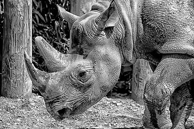 Photograph - Rhino Portrait by Beth Akerman