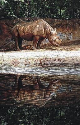 Photograph - Rhino Reflection by Joe Duket