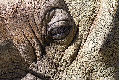 Photograph - Rhinoceros 7d9116 by Wingsdomain Art and Photography