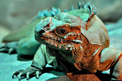 Ally Photograph - Rhinoceros Iguana by Ally  White