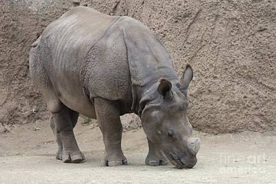 Photograph - Rhinoceros by John Telfer