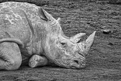 Rhinocerus Photograph - Rhinoceros by Nancy Aurand-Humpf