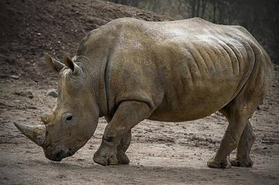 Rhinoceros Art Print by Svetlana Sewell
