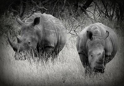 Photograph - Rhinos by Ramona Johnston