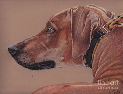 Drawing - Rhodesian Ridgeback by Charlotte Yealey