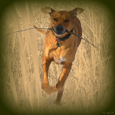 Dog Photograph - Rhodesian Ridgeback by Mim White